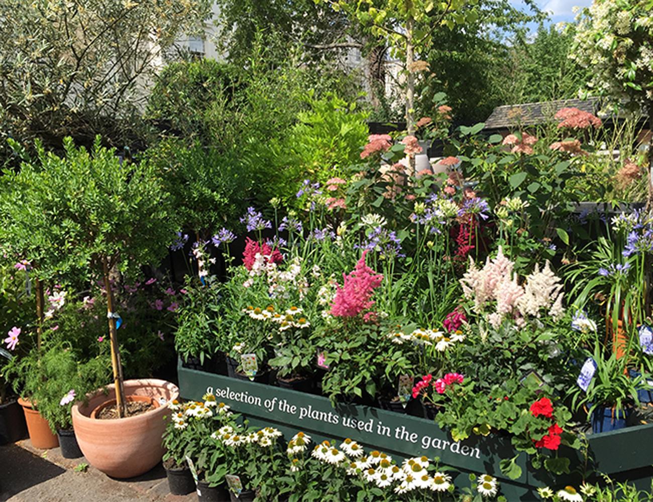 clifton nurseries stylish brunch spot in a winter garden