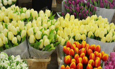 An extraordinary flower market in the heart of Covent Garden