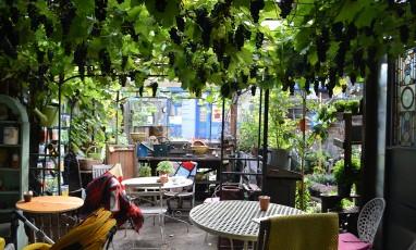 Alexandra Nurseries : un jardin secret comme en Provence