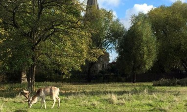 For Fresh Air: Clissold Park